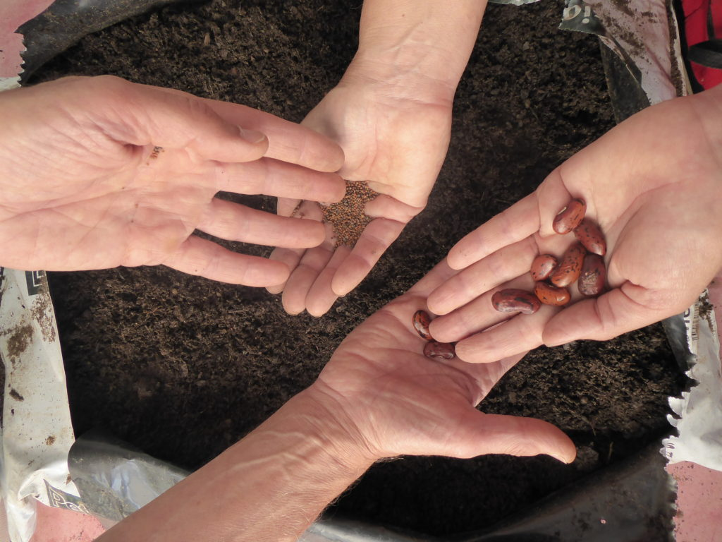 SEEDS, PLANTS AND CUTTINGS SWAP
